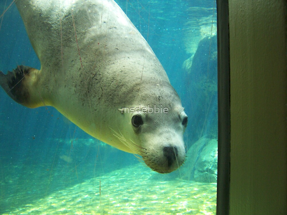 Hello Seal! by msdebbie