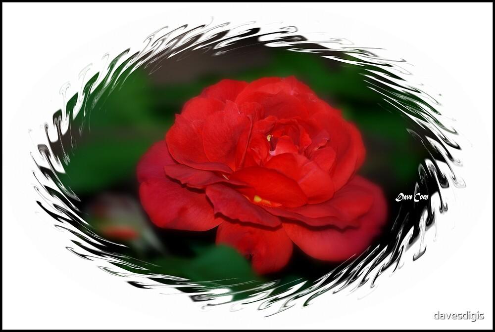 RED...RED ...ROSE by davesdigis