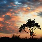 Lone Tree by sandgrouse