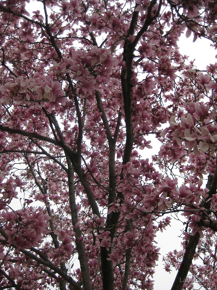 Cherry Blossoms by LaLaLaura