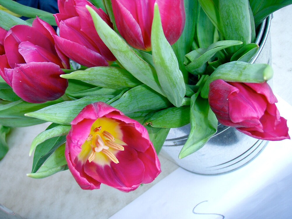 Tulips by DarylE