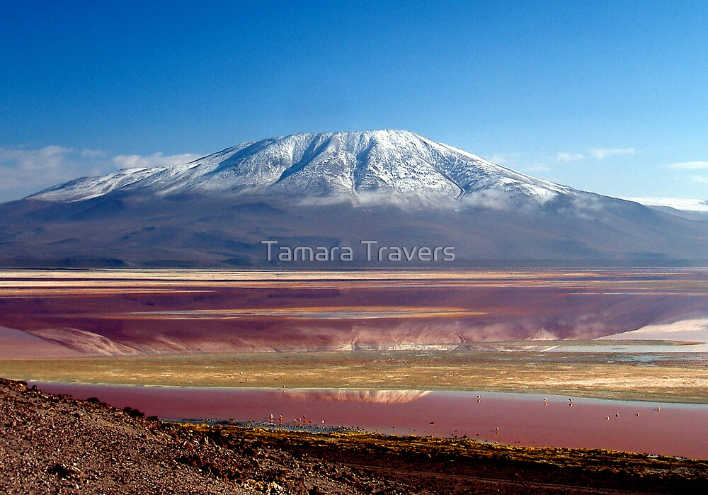 Laguna Colorada, Bolivia by Tamara Travers
