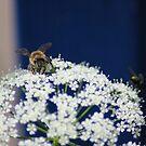 Biene im Detail von LarryWintersohn