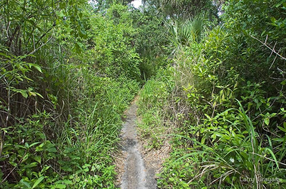 Wilderness trail by Larry  Grayam