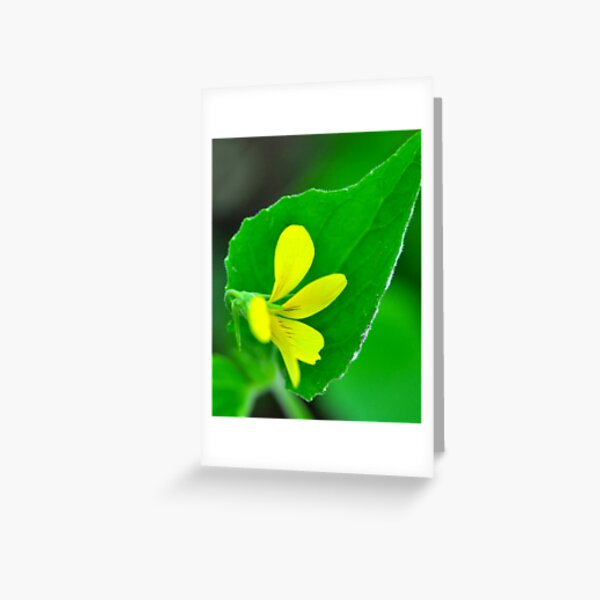 Downy Yellow Violet Greeting Card