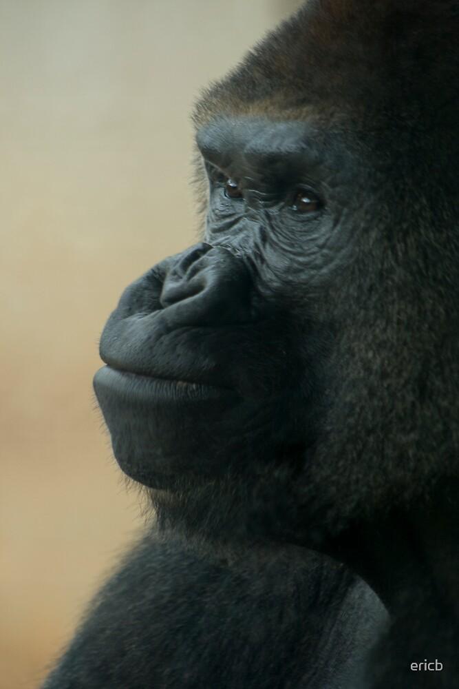 Gorilla 1 by ericb
