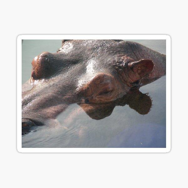 Hippo 001 Sticker