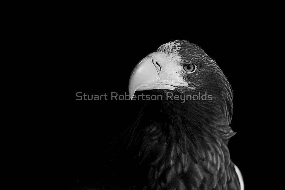 Untitled by Stuart Robertson Reynolds