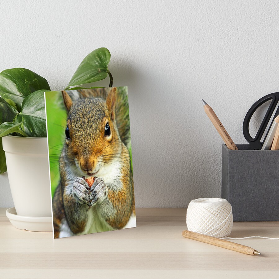 Squirrel Art Board Print