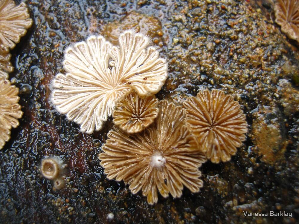 Fungi Spore Group by Vanessa Barklay