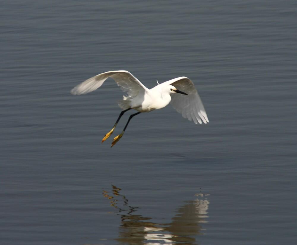 Egret landing  by Neil Ludford