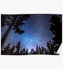 Forest Star Gazing An Astronomy Delight Poster