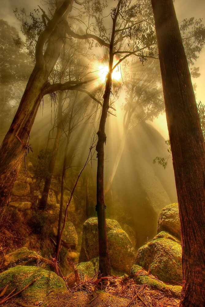 Quot Afternoon Mist Mount Buffalo Quot By Kevin Mcgennan Redbubble
