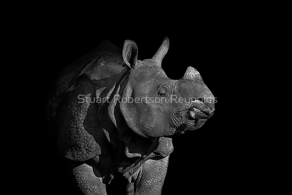 Rhino by Stuart Robertson Reynolds