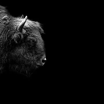 Bison by Sparky2000