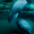 Manatees & Fish by Gregory Colvin
