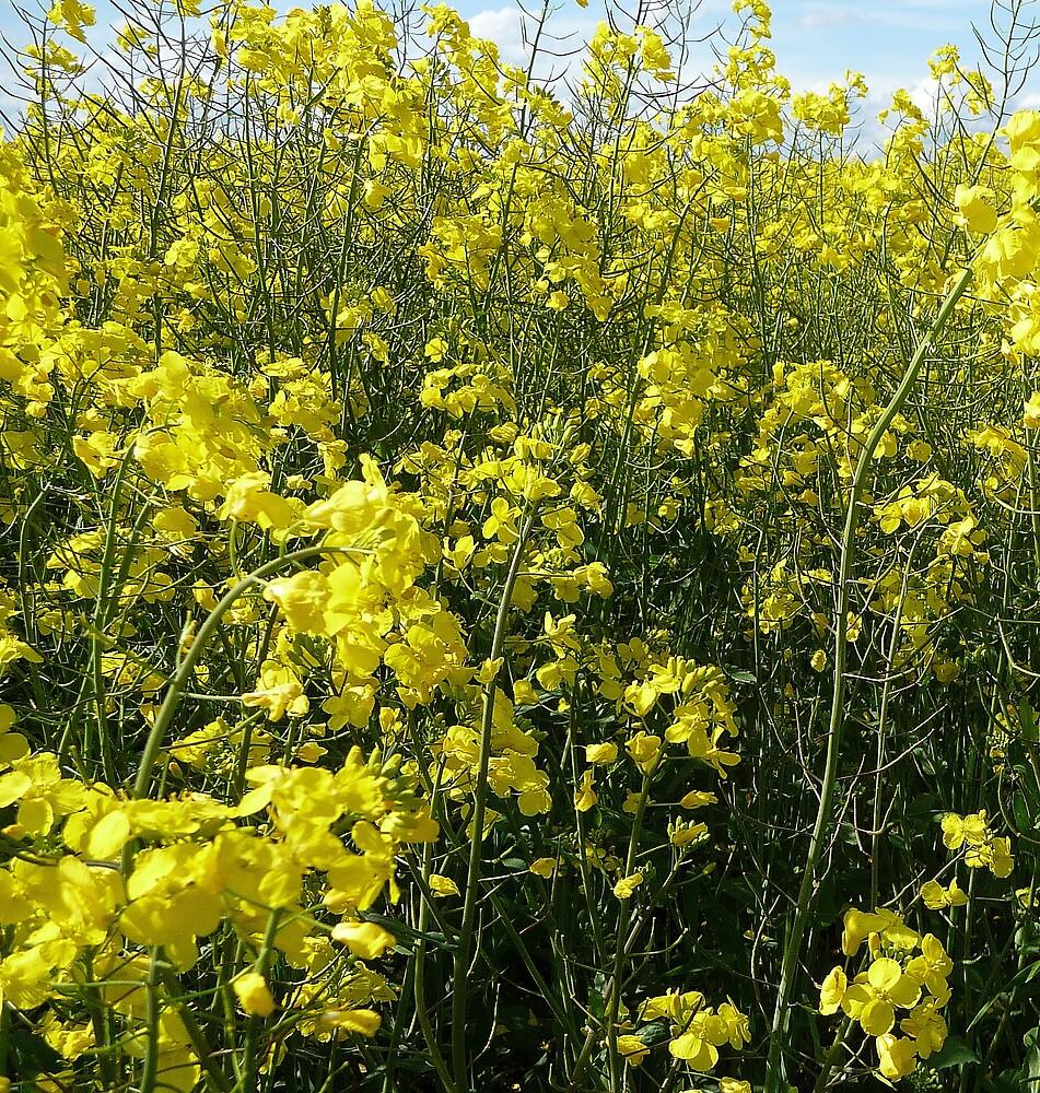 Yellow Fever by Braedene