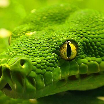 Snake by Esculor