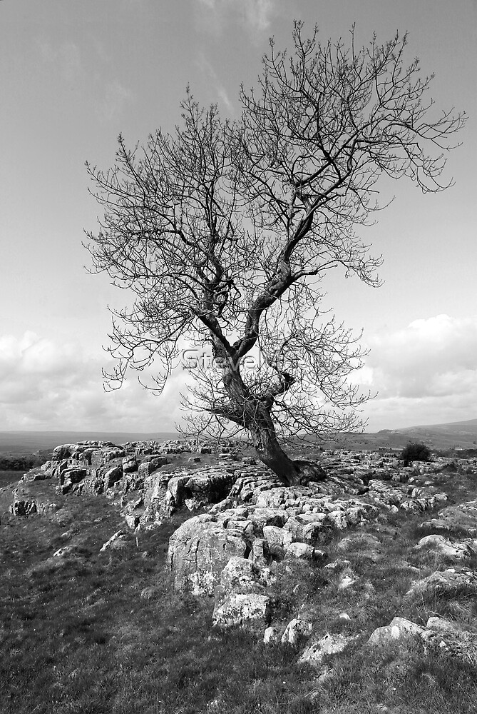 The Tree Of Life by SteveMG