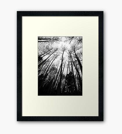 Swaying Aspens Framed Print