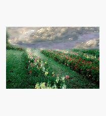 Longview Flowers Photographic Print