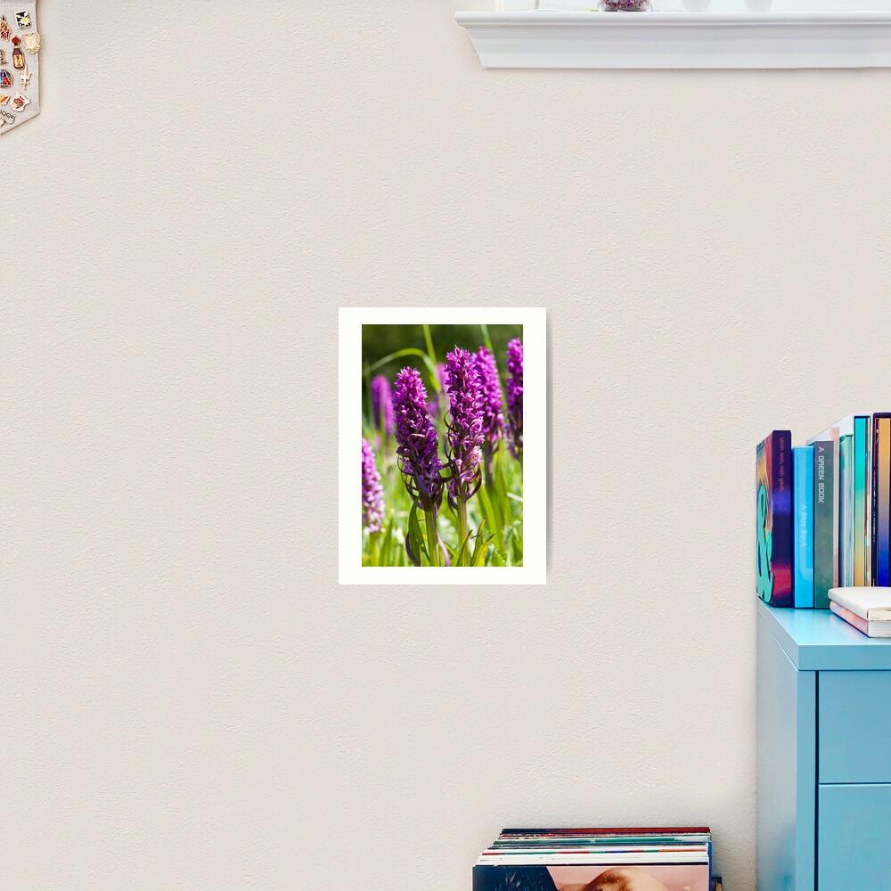 Early Marsh Orchid (Dactylorhiza incarnata) Art Print