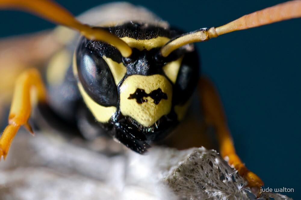 yellowjacket face by jude walton