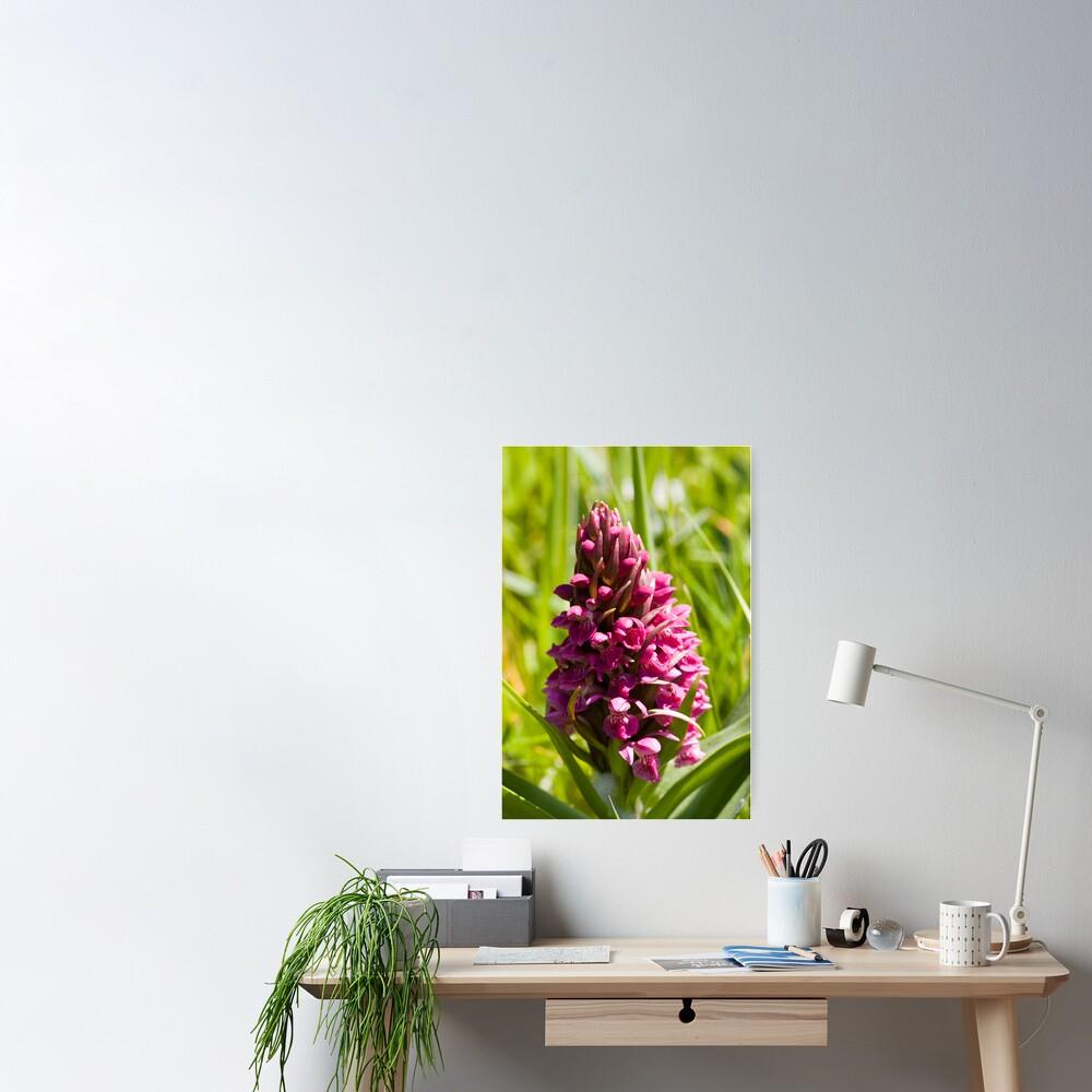 Southern Marsh Orchid (Dactylorhiza praetermissa) Poster