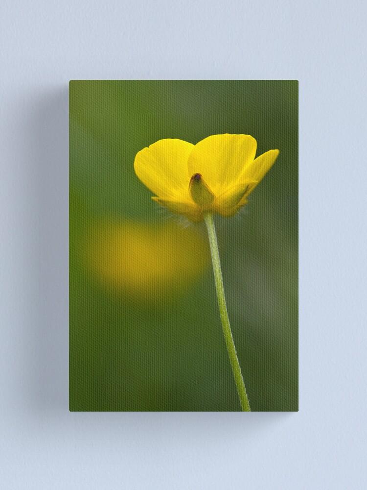 Alternate view of Meadow Buttercup (Ranunculus acris) Canvas Print