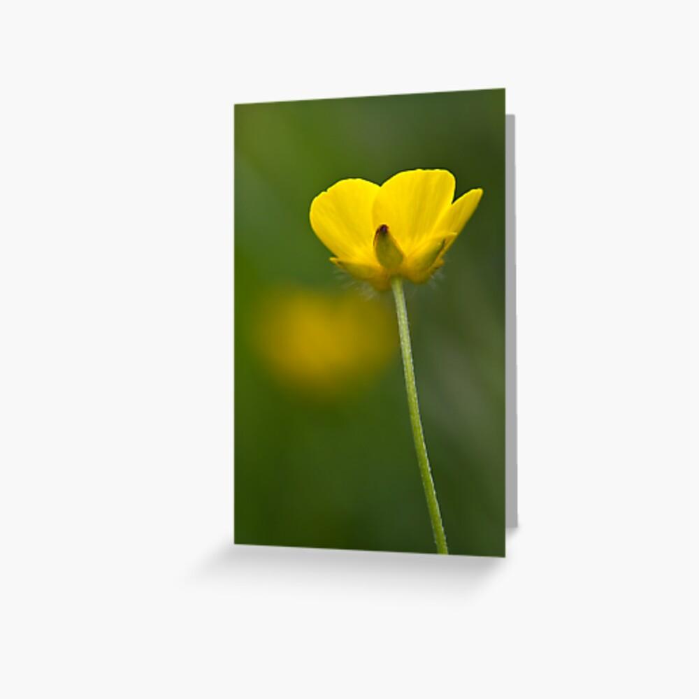 Meadow Buttercup (Ranunculus acris) Greeting Card