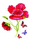 Poppies and Butterflies by Linda Callaghan