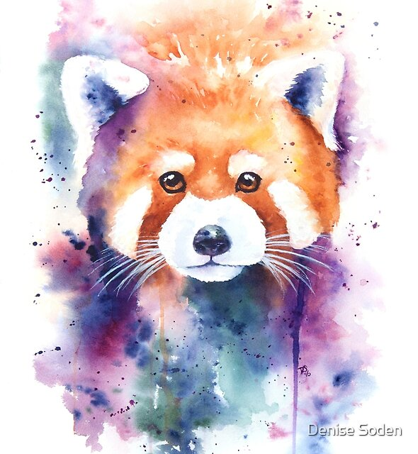 Red Panda Splash Watercolor by Denise Soden