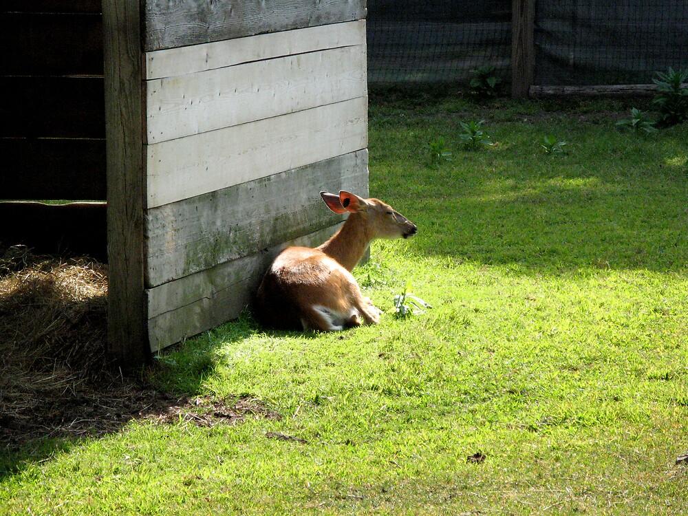 baby takes a rest by vizhen