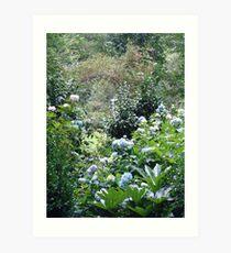 Hydrangea path - June's Garden Art Print