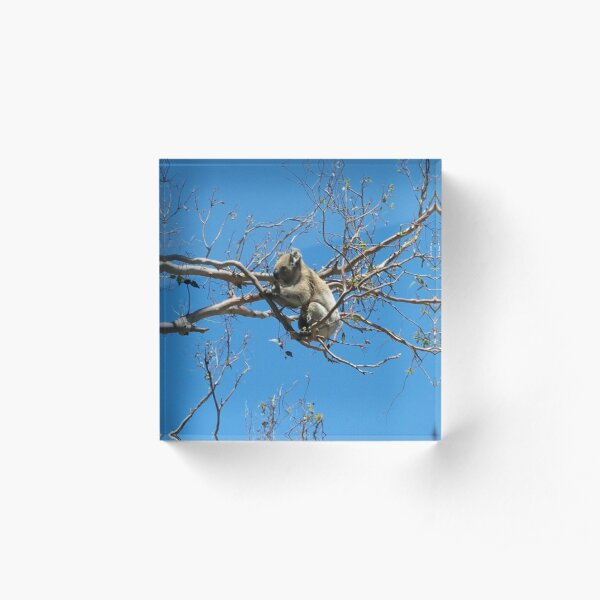 Koala Acrylic Block