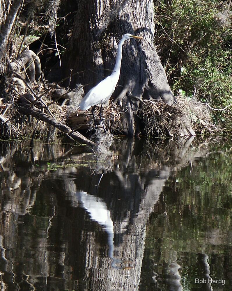 Great White Egret by Bob Hardy