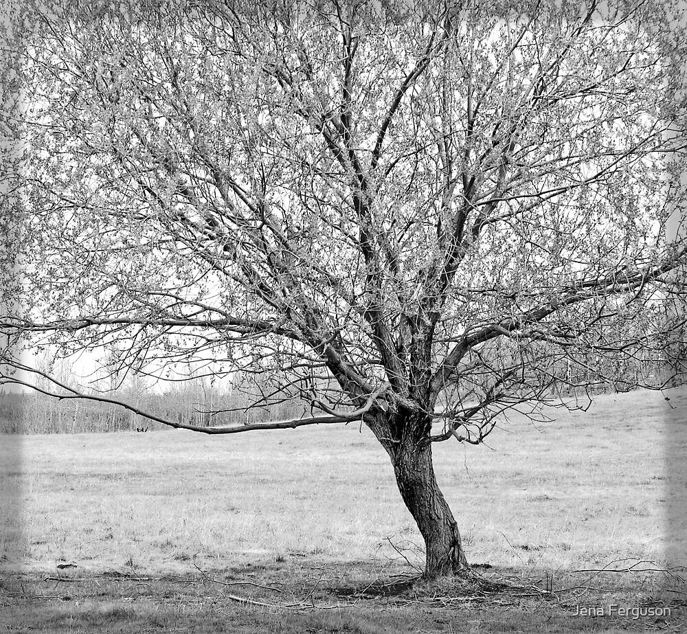The Tree of Life by Jena Ferguson