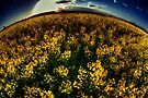 Essex Rapeseed Field by Nigel Bangert