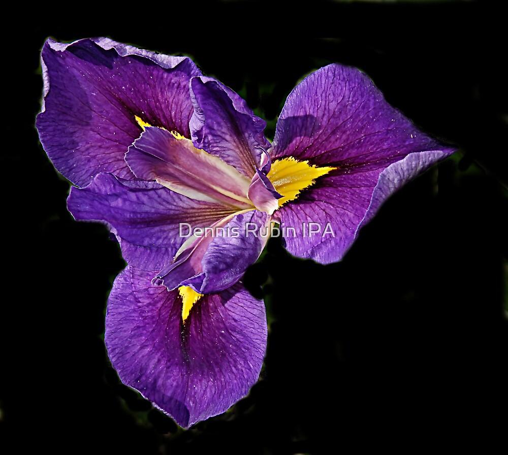 Iris in Purple by Dennis Rubin IPA