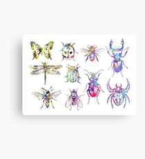 Insect Collection Metal Print