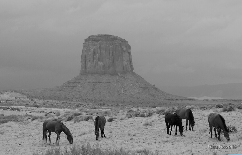 Wild Horses by Ray Rozelle