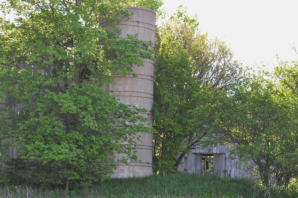 Silo and barns behind trees by mltrue