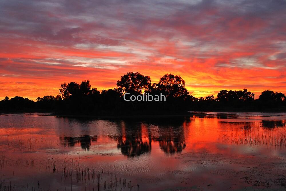 Sunrise Island Newy reservoir Cobar NSW by Ruth Anne  Stevens
