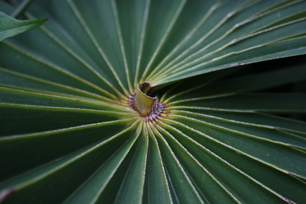 Palm Leaf by Colleen Salls