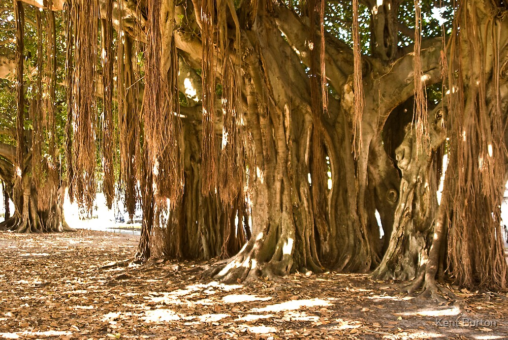 Under the Banyan Tree by Kent Burton