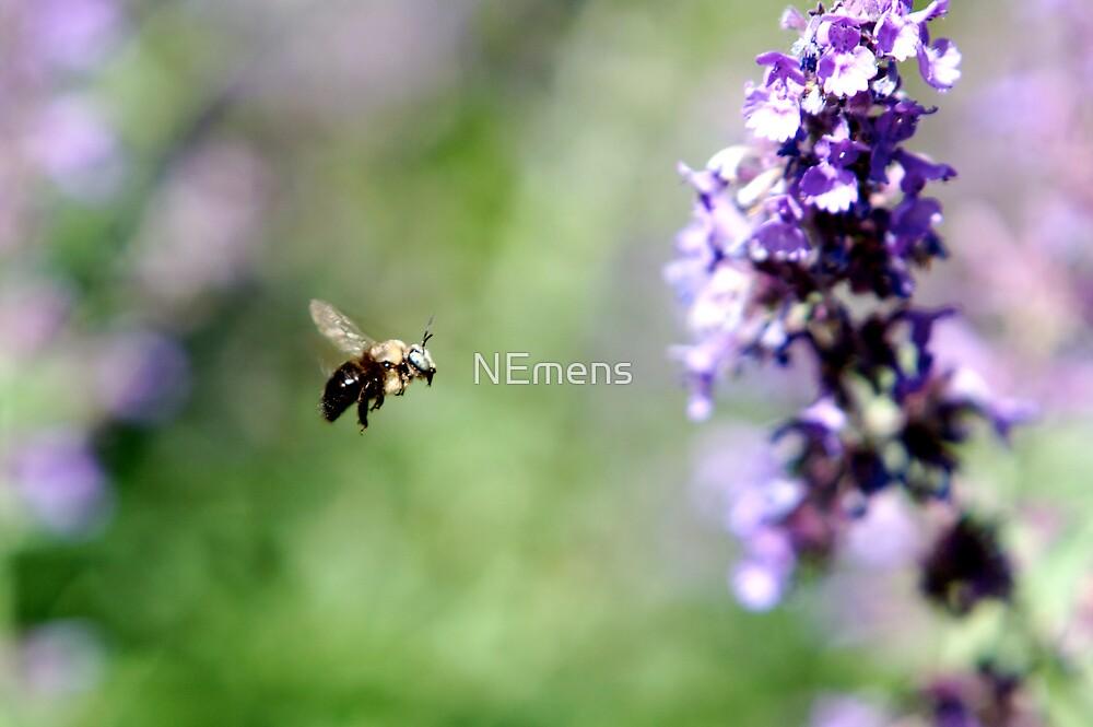 Buzz by NEmens