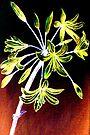 Agapanthus Flower Light  by Linda Callaghan