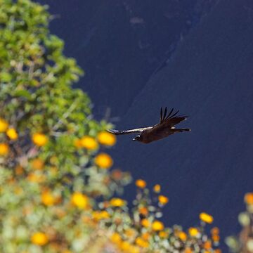 Flying into the bokeh light by aguakina