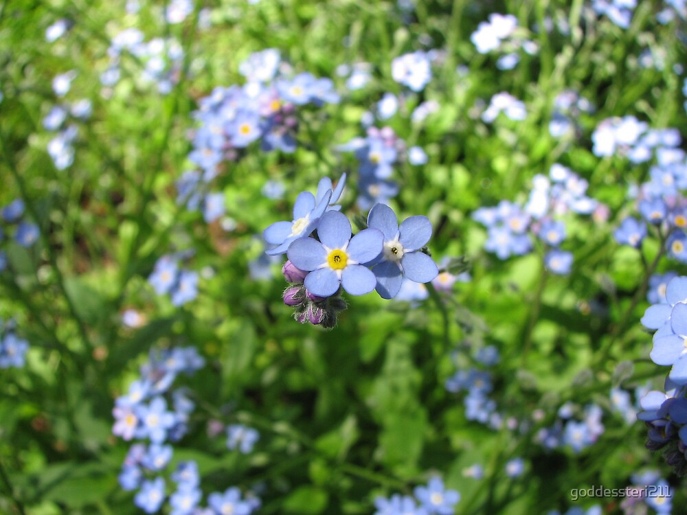 Forget me nots by goddessteri211