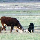 Mama Cow and Baby Calf in New Mexico by janetmarston